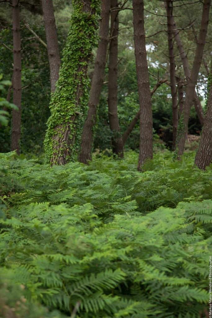 In den Wäldern von Carnac - 2
